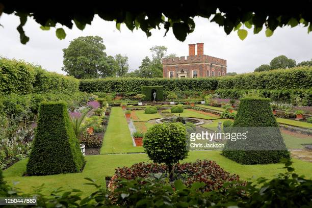 Detail of the gardens at the reopening of the Tudor gardens at Hampton Court Palace on June 18, 2020 in London, England. In line with government...