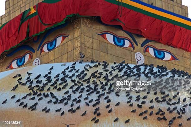 detail of the harmica and dome of boudhanath stupa, kathmandu - 仏陀の目 ストックフォトと画像