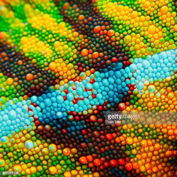 detail of the particular skin of a chameleon. - camaleonte foto e immagini stock