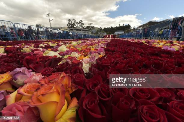 Detail of the path of roses that leads to the floral pyramid where more than 500000 roses were set in order to run for a Guinness World Record in...