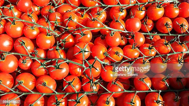 detail of tomatoes - massa stock pictures, royalty-free photos & images