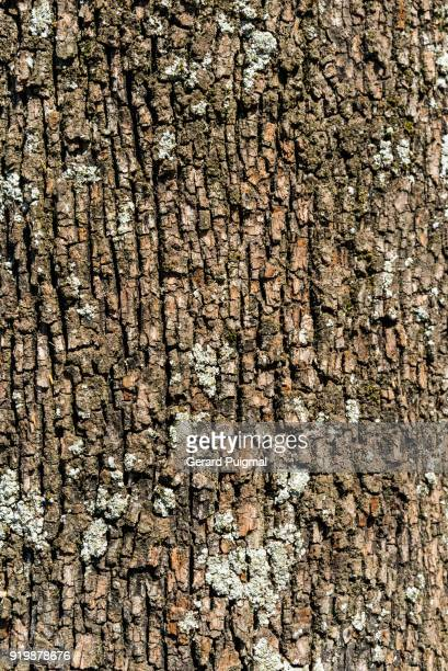 detail of tree bark with some lichens - bark stock pictures, royalty-free photos & images