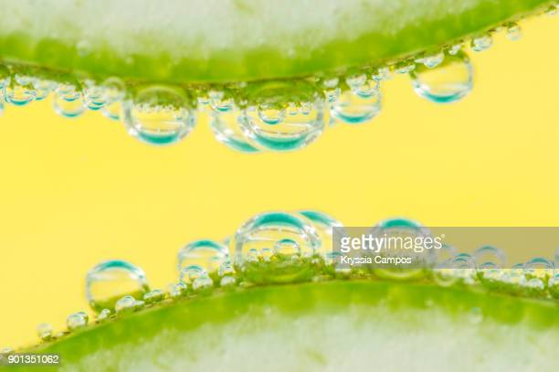 Detail of two slices of lemon with soda water in glass