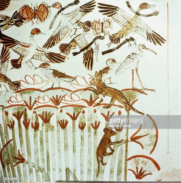 A detail of wall painting in the tomb of Menna In a papyrus thicket alive with birds nests with eggs butterflies ichneumon and cats hunters throw...