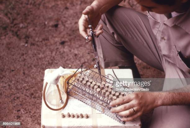 Detail photograph of a CDC scientist working outdoors using a pipette to add diluents to glass viles as part of a field study into arboviruses 1974...