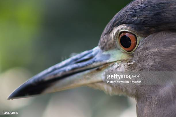 detail shot of a bird - harley bird stock pictures, royalty-free photos & images