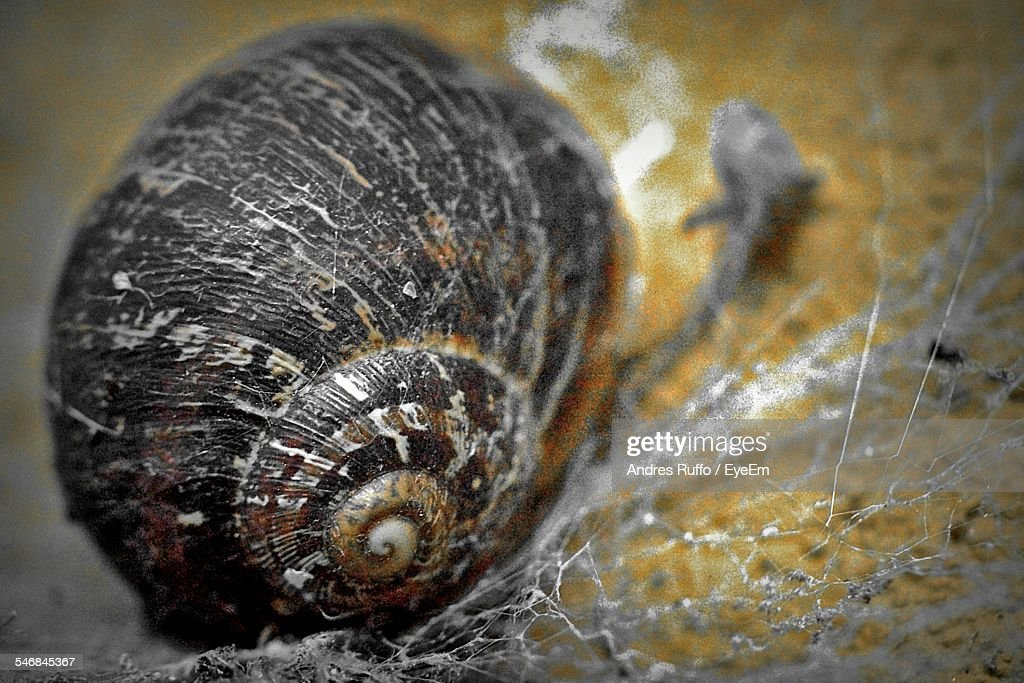 Detail Shot Of A Snail : Stock Photo