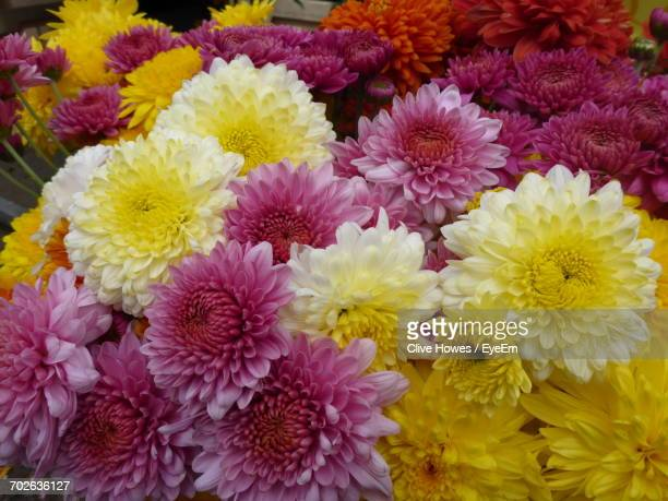 detail shot of colorful flowers - chrysanthemum imagens e fotografias de stock