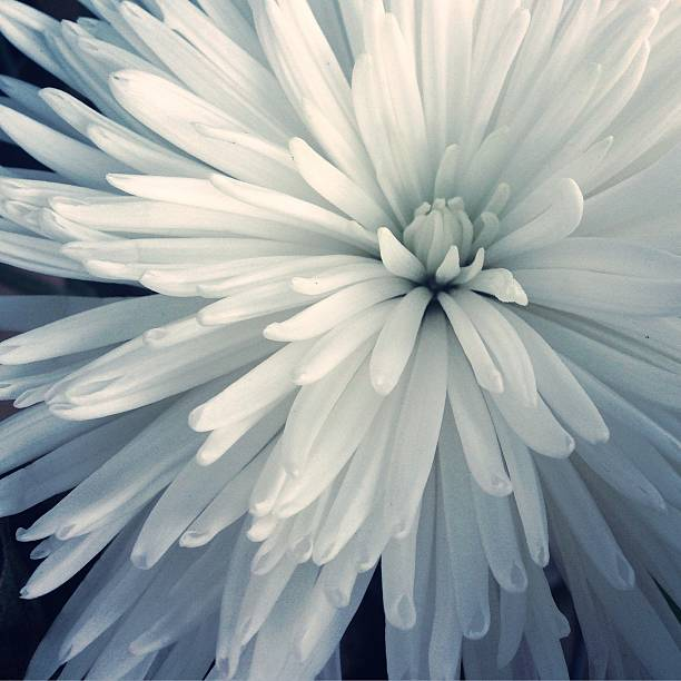 Detail Shot Of Cropped White Flower Wall Art