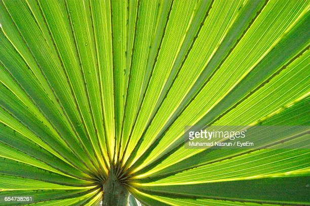 detail shot of green leaf - muhamad nasrun stock pictures, royalty-free photos & images