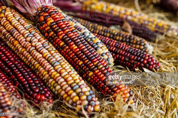 CONTENT] Detail shot of Indian corn resting on a hay bale in the town of Egg Harbor Door County Wisconsin