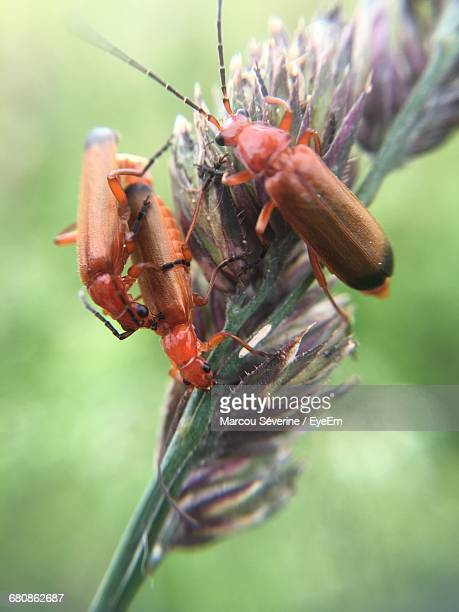 Detail Shot Of Insects Against Blurred Background