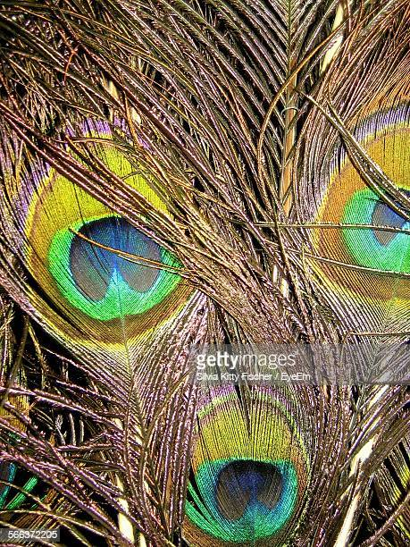 Detail Shot Of Peacock Feathers