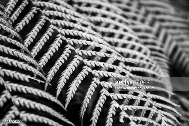 detail shot of ropes - truro cornwall stock pictures, royalty-free photos & images