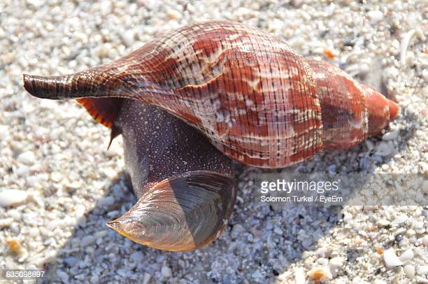 detail shot of snail - solomon turkel stock pictures, royalty-free photos & images