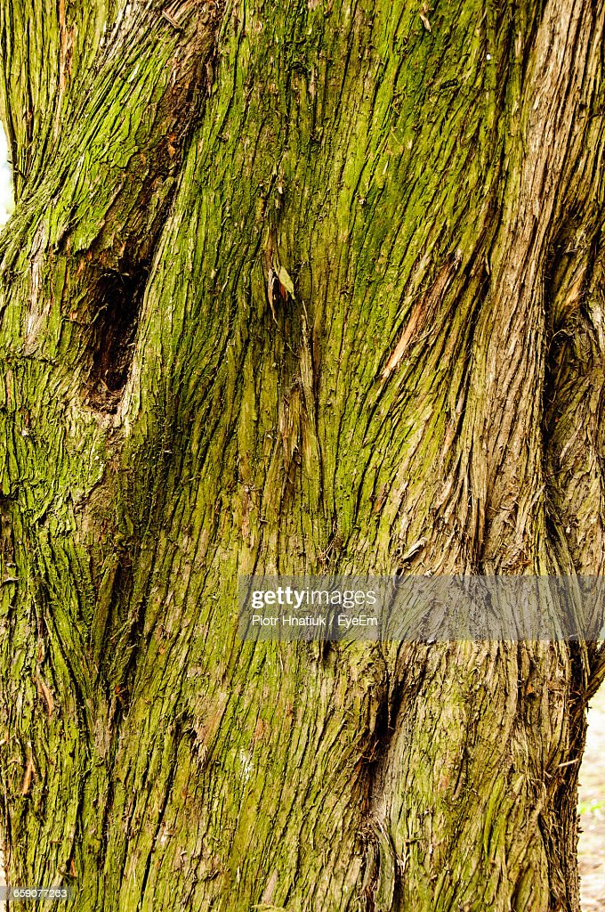 Detail Shot Of Tree Trunk : Stock Photo