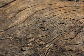 http://www.istockphoto.com/photo/bark-of-cedar-tree-texture-background-gm161098323-17134491