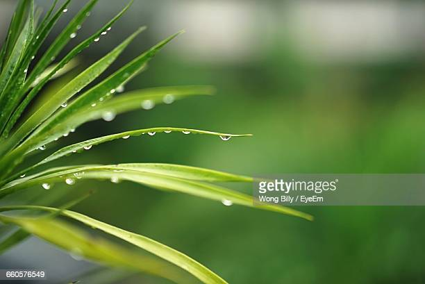 Detail Shot Of Water Drops On Leaves