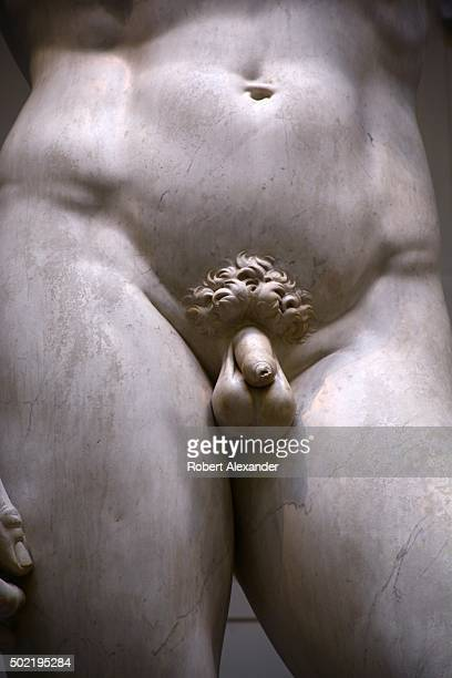 A detail view of the marble statue of the Biblical hero David by the Italian artist Michelangelo showing the model's uncircumcised penis on display...