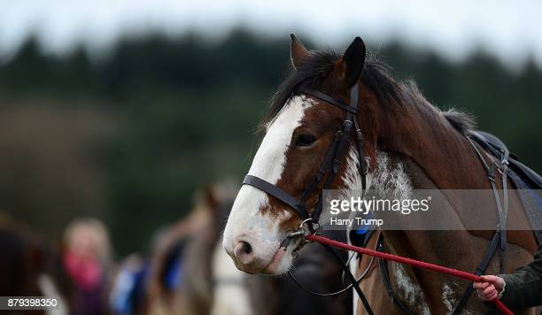 Detailed view of a Clydesdale Horse at Exeter Racecourse on November 26 2017 in Exeter England