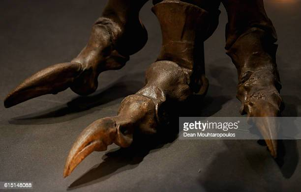 A detailed view of the feet or claws of Trix the female TRex exhibition at the Naturalis or Natural History Museum of Leiden on October 17 2016 in...