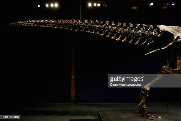 A detailed view of the tail of Trix the female TRex exhibition at the Naturalis or Natural History Museum of Leiden on October 17 2016 in Leiden...