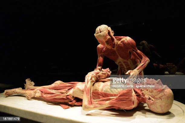 """Details from Gunther Von Hagensìs """"Body Worlds"""" exhbitions at GAM show room on November 6, 2013 in Bologna, Italy."""