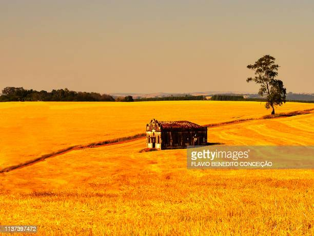 details on agricultural farms in the northern region of the state of parana in the city of londrina in brazil - londrina stock pictures, royalty-free photos & images