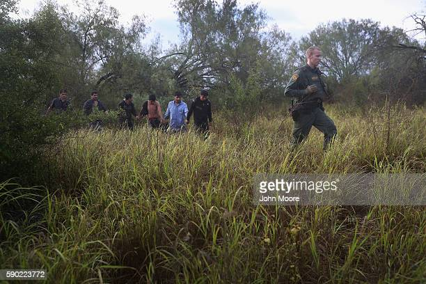 Detained immigrants are led through the brush after being captured by U.S. Border Patrol agents on August 16, 2016 in Roma, Texas. Border security...