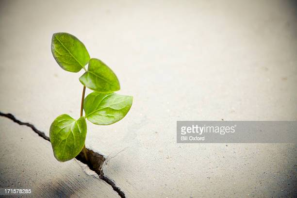 determination: plant growing - conquering adversity stock pictures, royalty-free photos & images