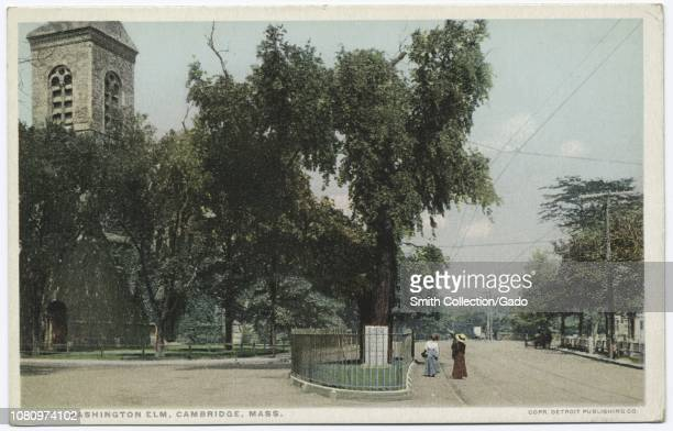 Detroit Publishing Company vintage postcard reproduction of the Washington Elm under this tree Washington first took command of the American Army...