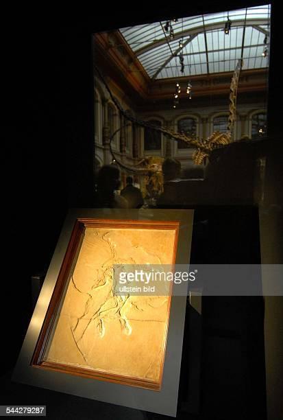 Deutschland Berlin Mitte Neueroeffnung des Naturkundemuseums Die neue Dauerausstellung EVOLUTION IN AKTION Berliner Exemplar des Archaeopteryx