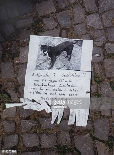 """Deutschland, Berlin - Zettel """"Hund gesucht"""" mit Foto und dem Text """"Entlaufen? Gestohlen? am 6.6. Gegen 13 Uhr vorm Krankenhaus Lichtenberg Wenn Sie..."""