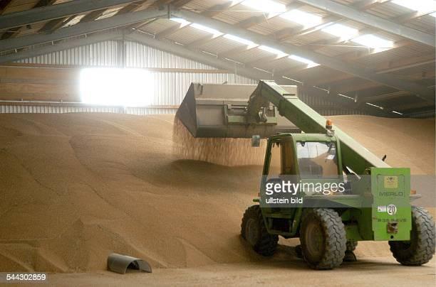 Deutschland Landwirtschaft Aufschütten von Weizen mit einem Bagger in der Lagerhalle für Getreide