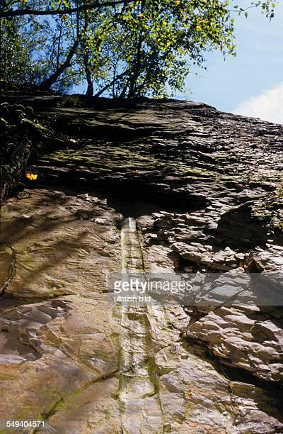 Deutschland, Witten-Gedern, Steinbruch Rauen. Die Pflanzenwelt der Oberkarbonzeit wurde von teilweise baumgroßen Farnen, Baerlappgewaechsen und...