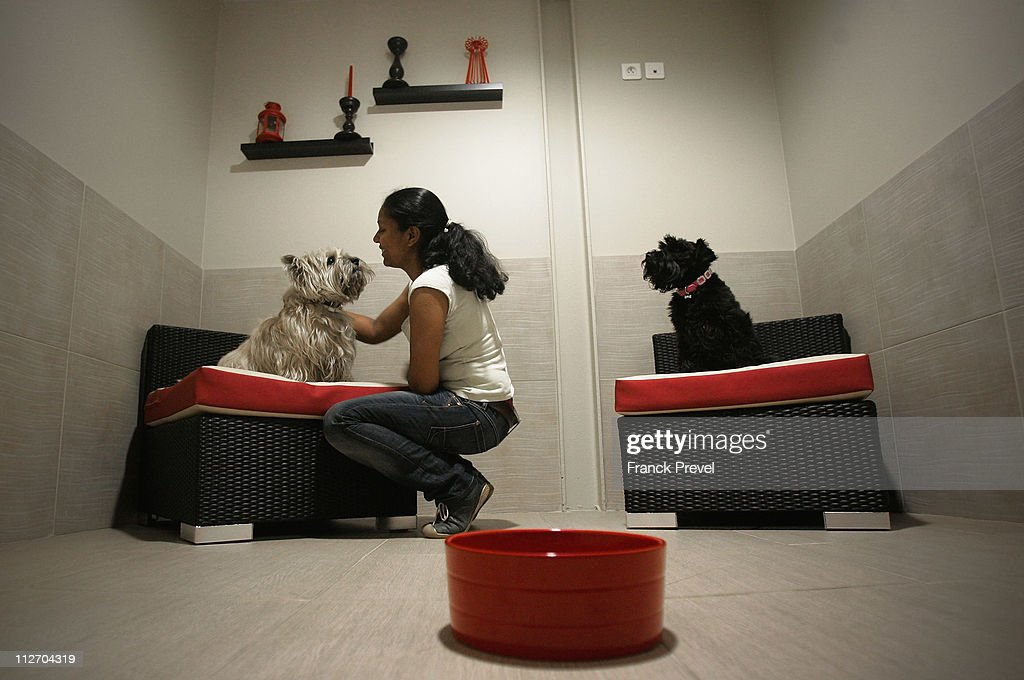 'Actuel Dogs' - Luxury Dogs Hotel Visit : News Photo