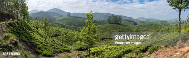 Devikulam Tea Plantation Munnar Kerala India