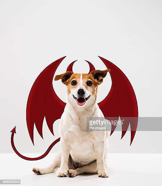 devil dog - devil costume stockfoto's en -beelden