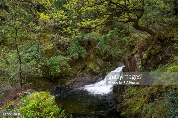 devil's bridge falls, wales - wales stock pictures, royalty-free photos & images