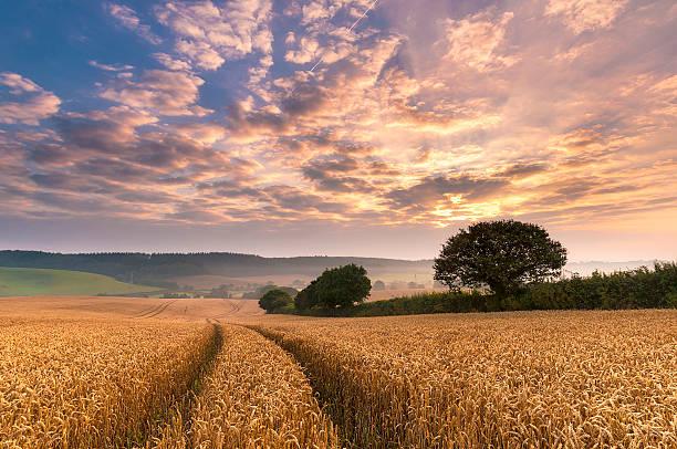Devon sunrise, England