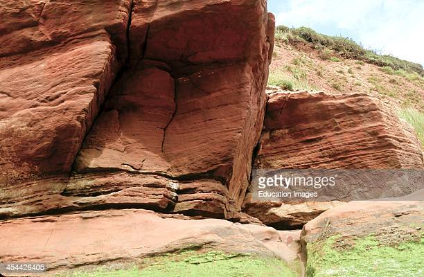 Devonian red sandstone showing strata and joints June Exmouth Devon England