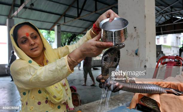 A devotee bathes a snake with milk on Nag Panchami festival on August 26 2017 in Jammu India Nag Panchami is a traditional worship of snakes or...