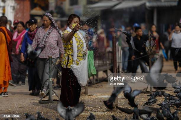 Devotees offer grains to the pigeons at the premises of Bouddhanath Stupa in Kathmandu Nepal May 19 2018