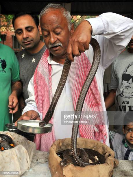 Devotees offer milk to a snake on Nag Panchami festival on August 26 2017 in Jammu India Nag Panchami is a traditional worship of snakes or serpents...
