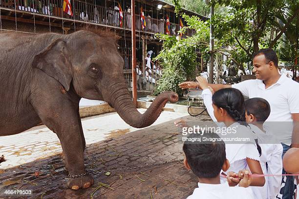 Devotees trying to touch the trunk of the elephant in gangarama buddhist temple - Colombo during a Vesak festival day.