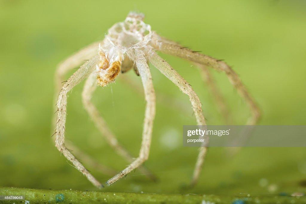 Devoured spider : Stock Photo