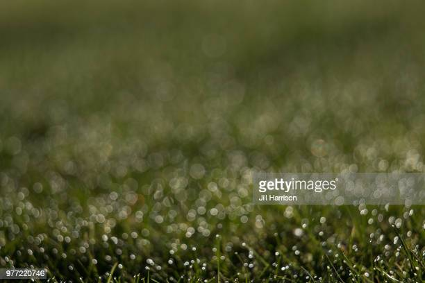 dew bokeh - jill harrison stock pictures, royalty-free photos & images