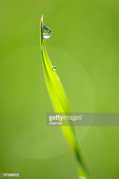 dew drop on grass - ogphoto stock pictures, royalty-free photos & images