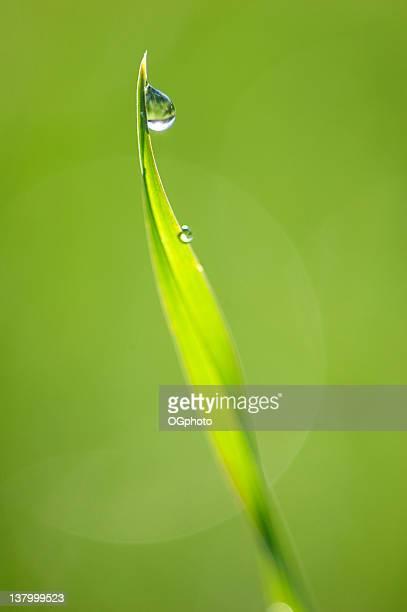 rugiada sull'erba - ogphoto foto e immagini stock