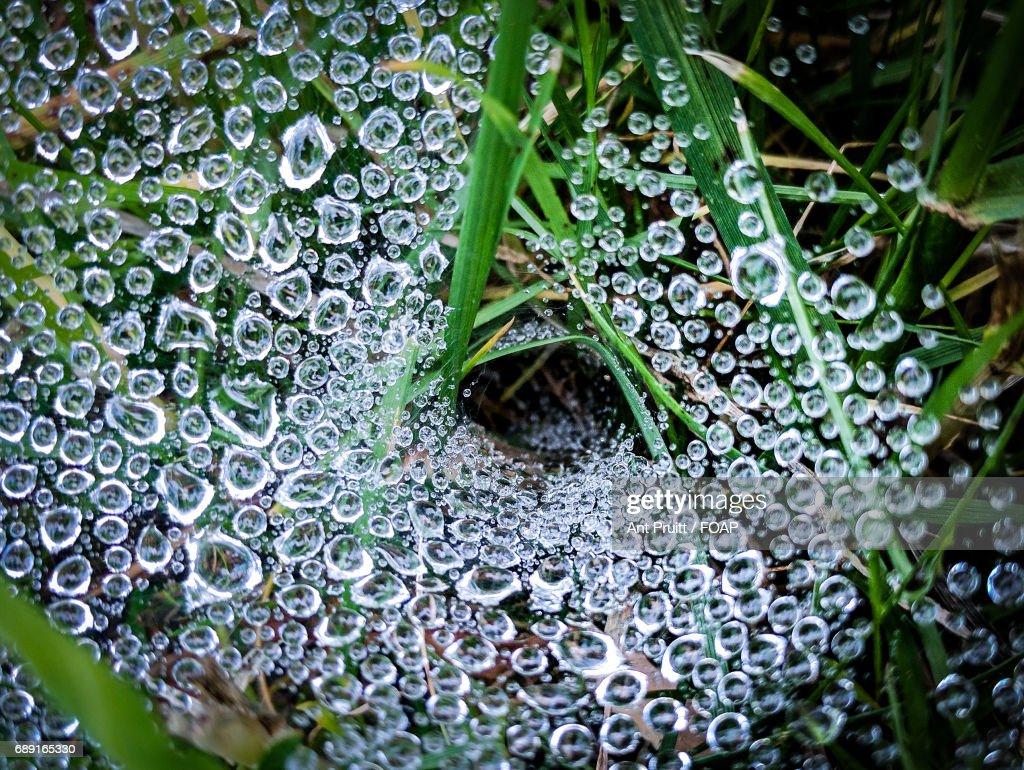 Dew drop on green grass : Stock Photo